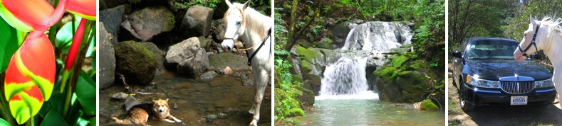 Getting To Finca Caballo Loco Horseback Riding And Lodge