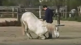 video of horses